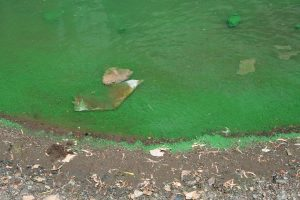 Algae-pollution in water
